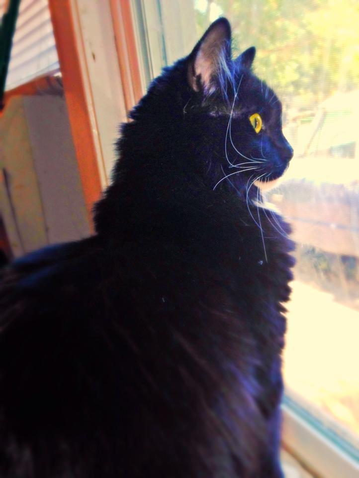 Cat sees squirrel