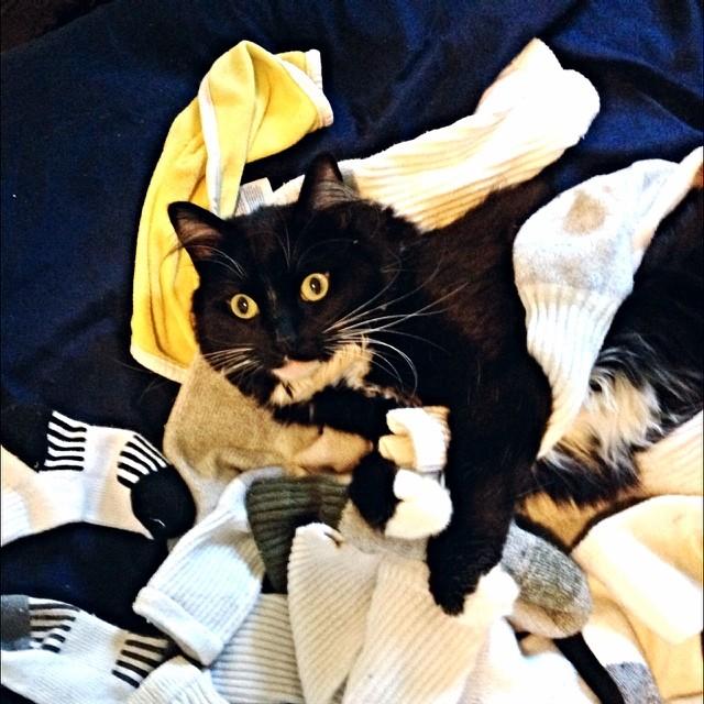 sock snatcher cat